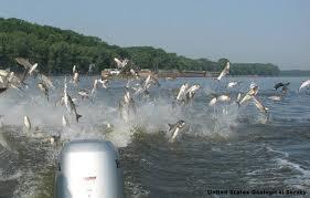 Ιπτάμενα ψάρια...