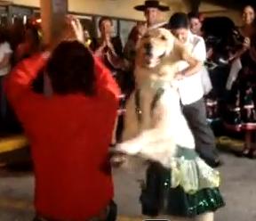 Χορεύοντας με τον πιο έξυπνο σκύλο !