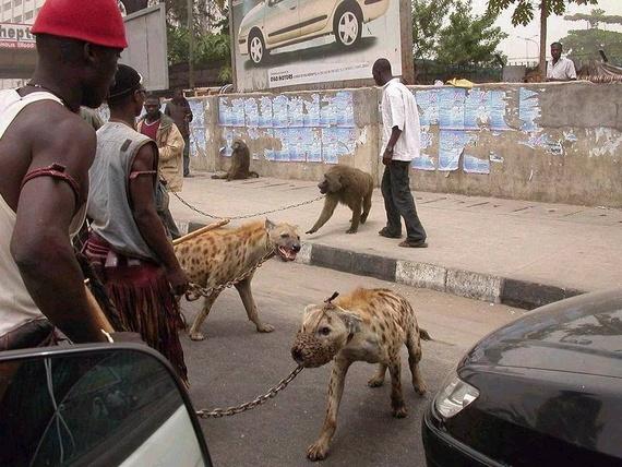 Τα κατοικίδια ζώα της Αφρικής!