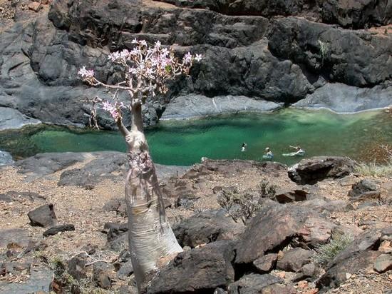 Το νησί Σακότρα! Εξωγήινο τοπίο στη Γη