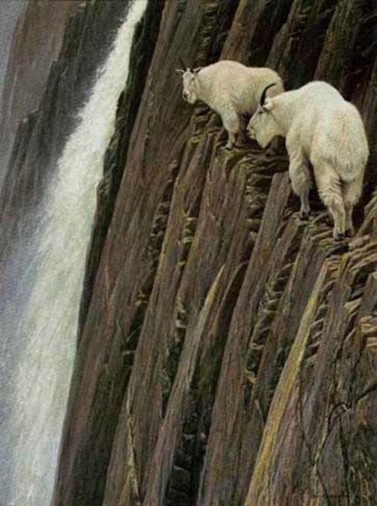 Οι καλύτεροι ορειβάτες του κόσμου ή αλλιώς... κατσίκες!