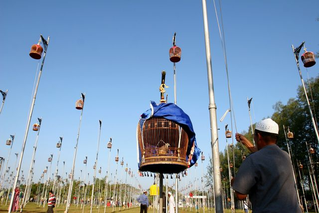 Perierga.gr - Διαγωνισμός τραγουδιού πουλιών