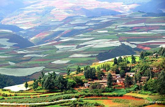 Πανδαισία χρωμάτων στους αγρούς της
