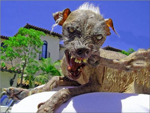 Άσχημα σκυλιά