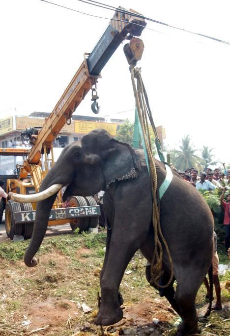 Perierga.gr - Τραυματισμένος ελέφαντας