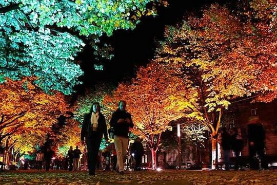 Perierga.gr - Το φεστιβάλ του φωτός