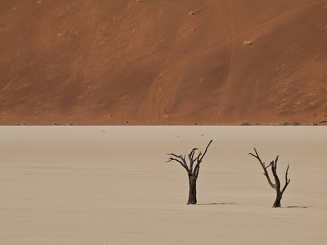 Perierga.gr - Περίεργα δάσος στην έρημο