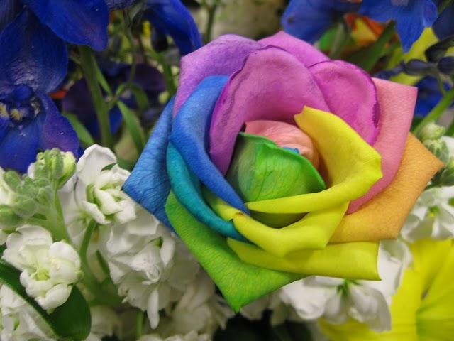Perierga.gr - Τριαντάφυλλα ουράνιο τόξο