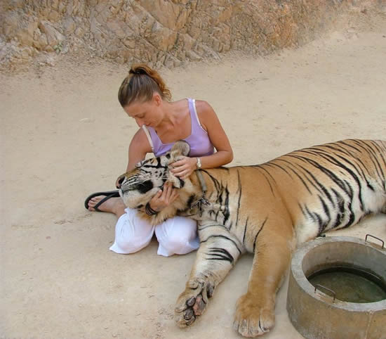 Perierga.gr - Ο ναός με τις τίγρεις