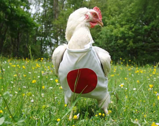Perierga.gr - Ρούχα για κότες!