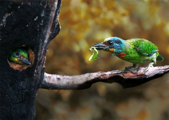 Perierga.gr - Φωλιές πουλιών!