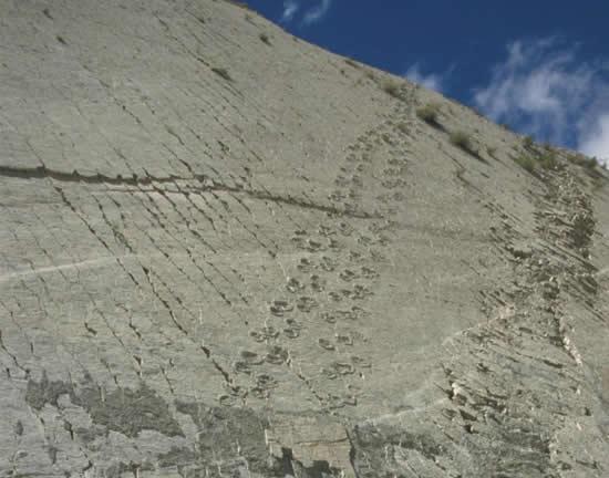 Perierga.gr - Ο τοίχος των δεινοσαύρων