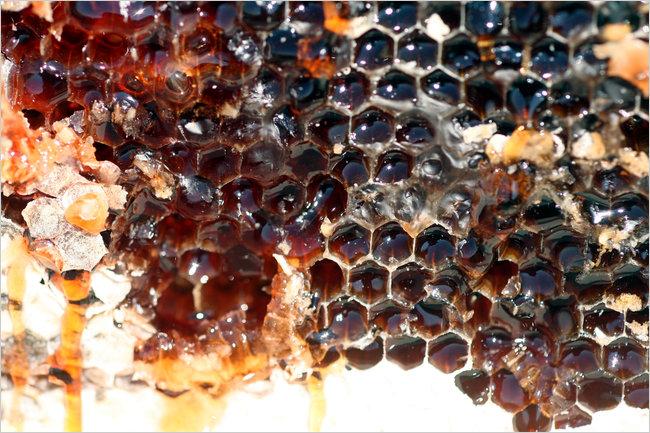 Perierga.gr - Κόκκινες μέλισσες