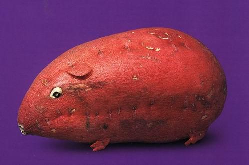 Perierga.gr - Η τέχνη των φρούτων!