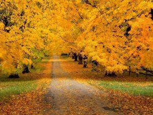 Οι ομορφότεροι δρόμοι στον κόσμο!