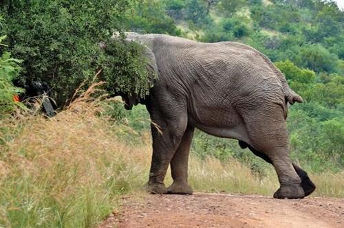 Perierga.gr - Θυμωμένος ελέφαντας!
