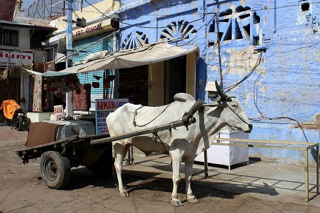 Perierga.gr - Η μπλε πόλη της Ινδίας!