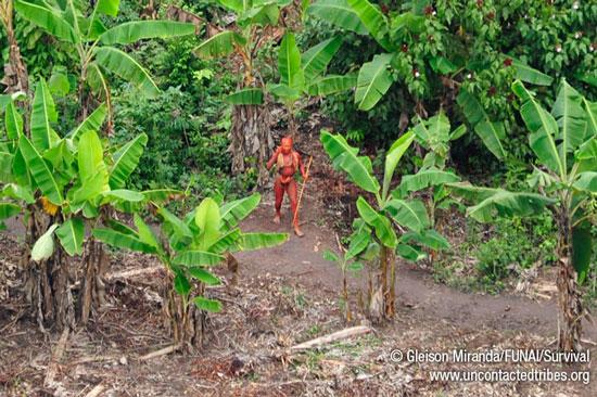 Χαμένη φυλή.. του Αμαζονίου χρησιμοποιείται ως όπλο κατά της παράνομης υλοτομίας..
