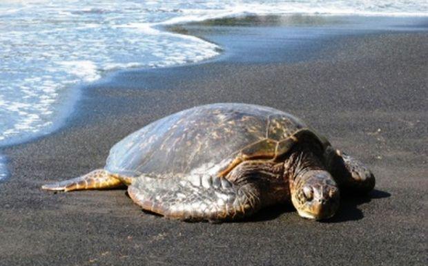 Perierga.gr - Χελώνες με προσόντα!