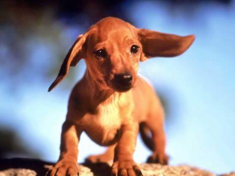 Perierga.gr - Κουφός σκύλος μαθαίνει να «μιλά»!