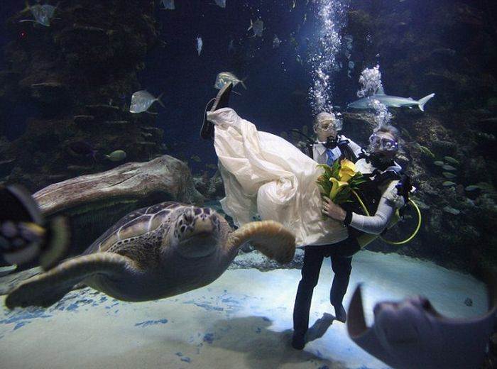 Perierga.gr - Υποβρύχιος γάμος!