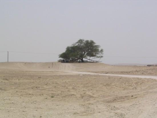 Perierga.gr - Το δέντρο της ζωής!