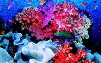 Perierga.gr- Κοραλλιογενείς ύφαλοι