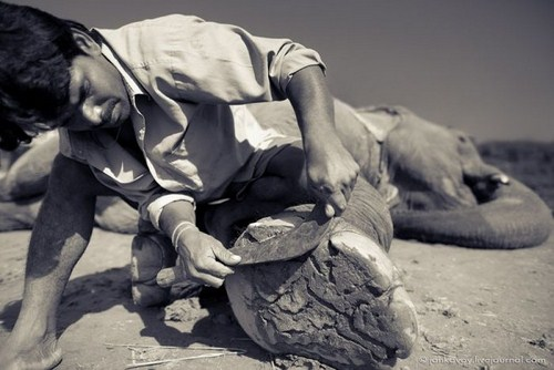 Perierga.gr - Πεντικιούρ σε ελέφαντα