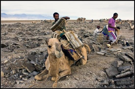 Perierga.gr - Καμήλες