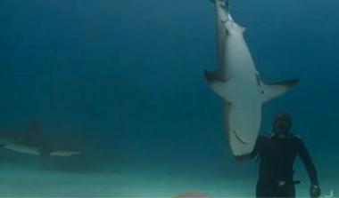 Perierga.gr - Γητευτής καρχαριών