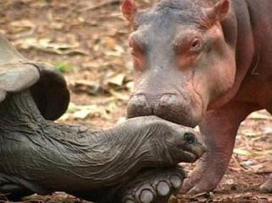 Perierga.gr - Ασυνήθιστη φιλία μεταξύ ζώων