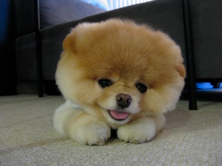 Perierga.gr - Ο σκύλος με το 1 εκ. θαυμαστές!