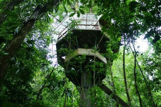 Perierga.gr - Σπίτια πάνω σε δέντρα!