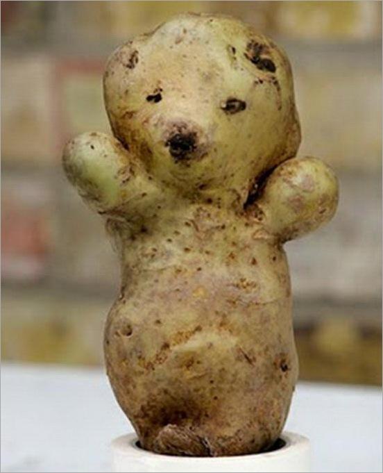 Perierga.gr - Λαχανικά με περίεργα σχήματα