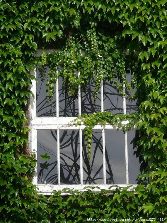 Perierga.gr - Σπίτια καλυμένα από κισσούς!
