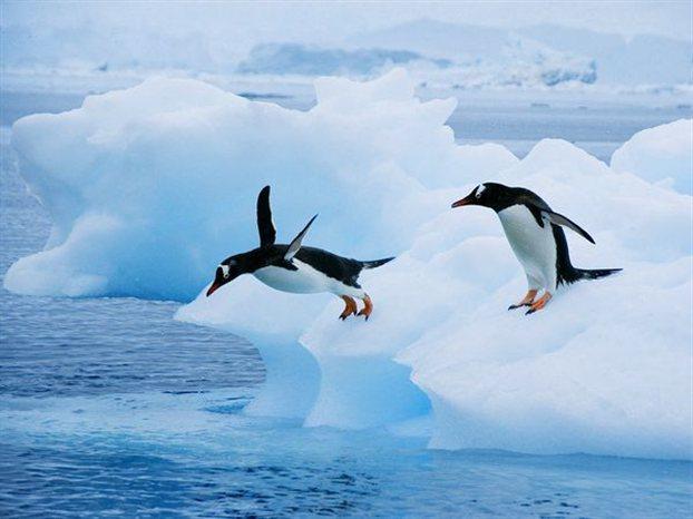 Perierga.gr - Το μυστικό των πιγκουίνων