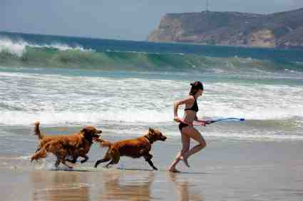 Perierga.gr - Επιτρέπεται ο σκύλος στην παραλία;