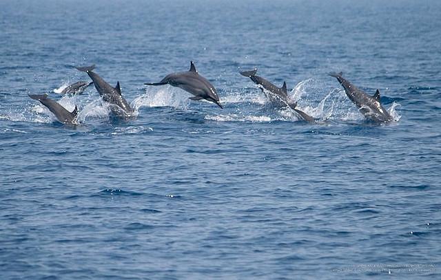 Perierga.gr - Δελφίνια
