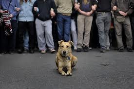 Perierga.gr - Ωδή στο σκύλο επαναστάτη