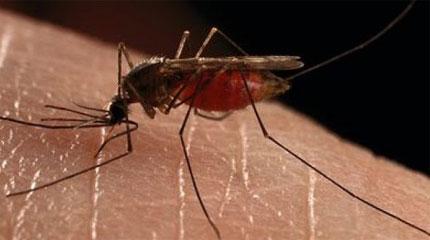 Perierga.gr - Υποφέρετε από τα κουνούπια; Έρχεται η λύση
