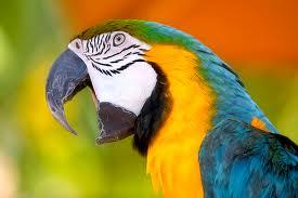 Perierga.gr - Οι παπαγάλοι στο κλαμπ των έξυπνων ζώων