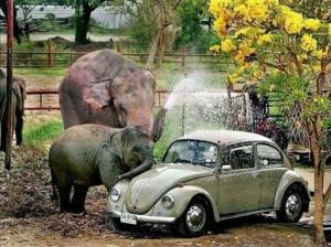 Ελέφαντες σε διάφορες καταστάσεις