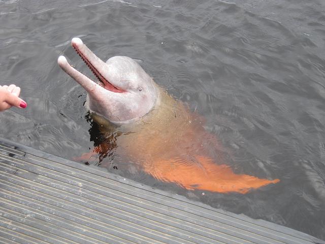 Perierga.gr - Ροζ δελφίνια!