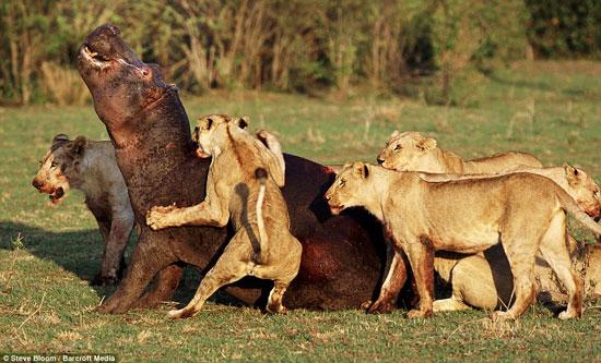 Perierga.gr - Μάχες επιβίωβσης στην άγρια φύση