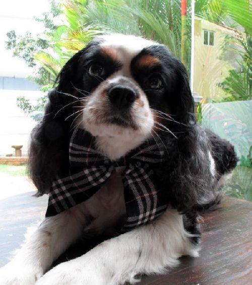 Perierga.gr - Σκυλάκια με στυλ!