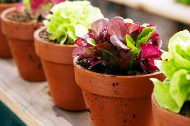 Perierga.gr - Πώς να «αναστήσετε» τα λουλούδια σας μετά τις διακοπές