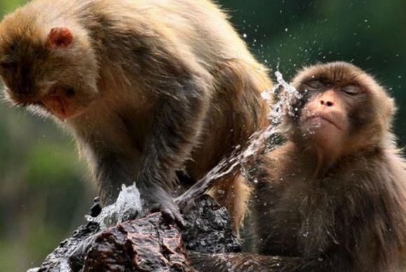Perierga.gr - Όταν τα ζώα αναζητούν τη δροσιά