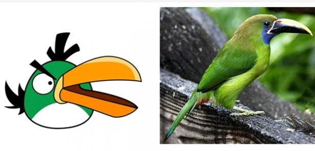 Perierga.gr - Τα Angry Birds στην πραγματική τους ζωή