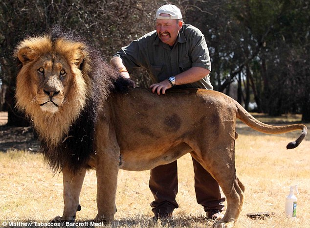 Perierga.gr - Κομμωτήριο... λιονταριών!