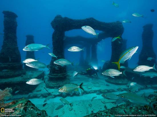 David Doubilet - Memorial Reef